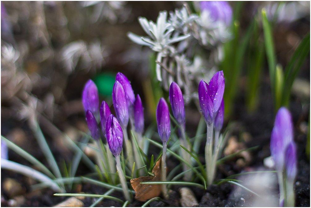 2015-03-02 Frühling